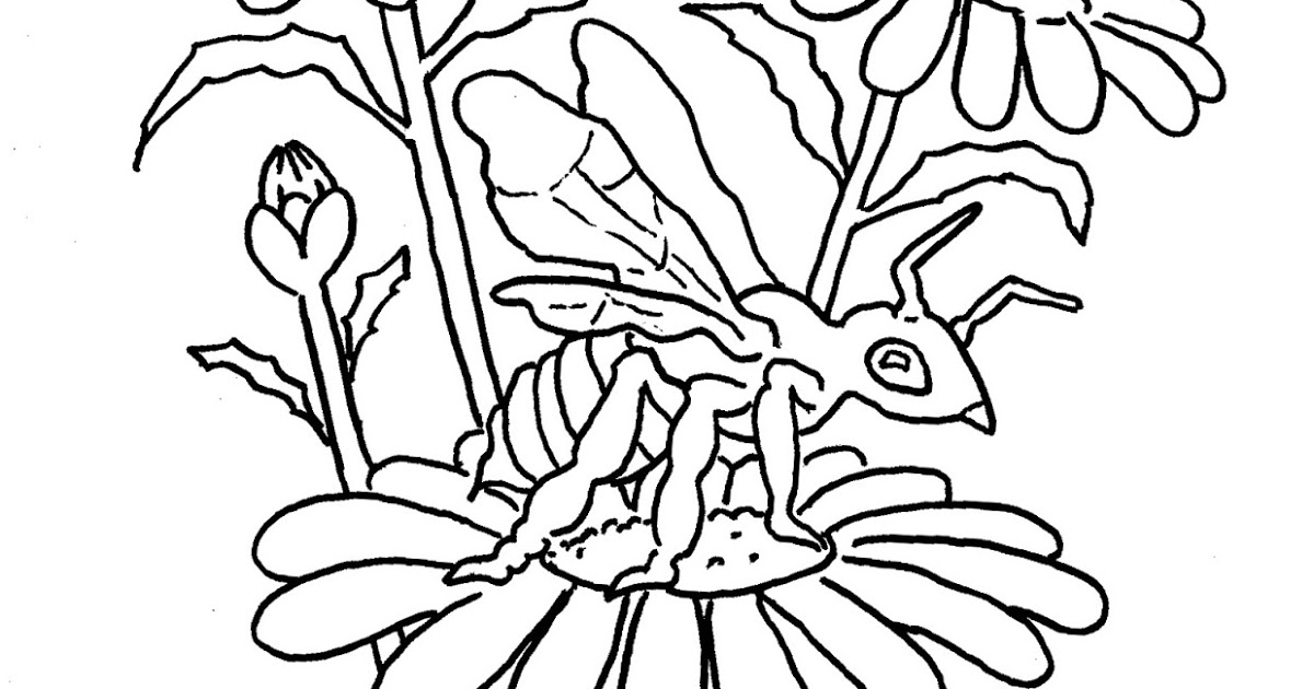 bee on flower coloring page spring flower and bees coloring pages bee coloring pages page on bee coloring flower