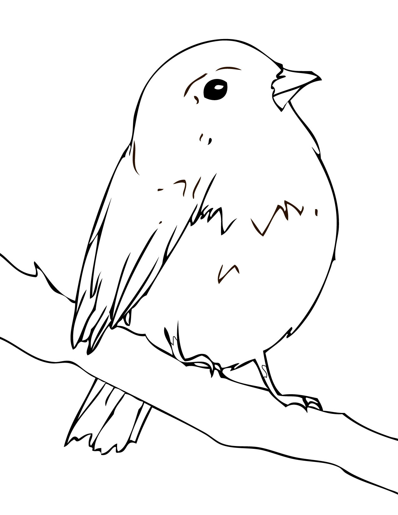 bird colouring pictures angry birds coloring pages for your small kids pictures colouring bird