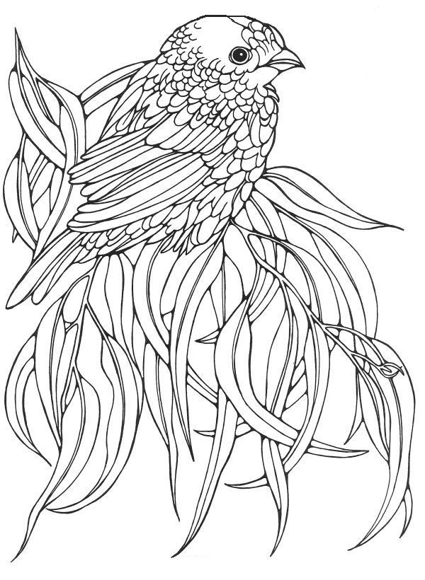 bird colouring pictures angry birds coloring pages team colors bird pictures colouring