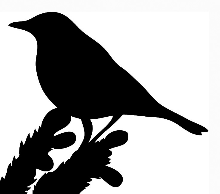 bird outlines bird black outline clipart best outlines bird