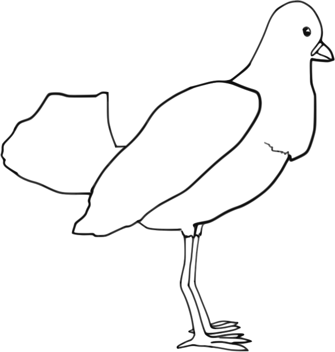 bird outlines clipart birds outline clipart birds outline transparent outlines bird