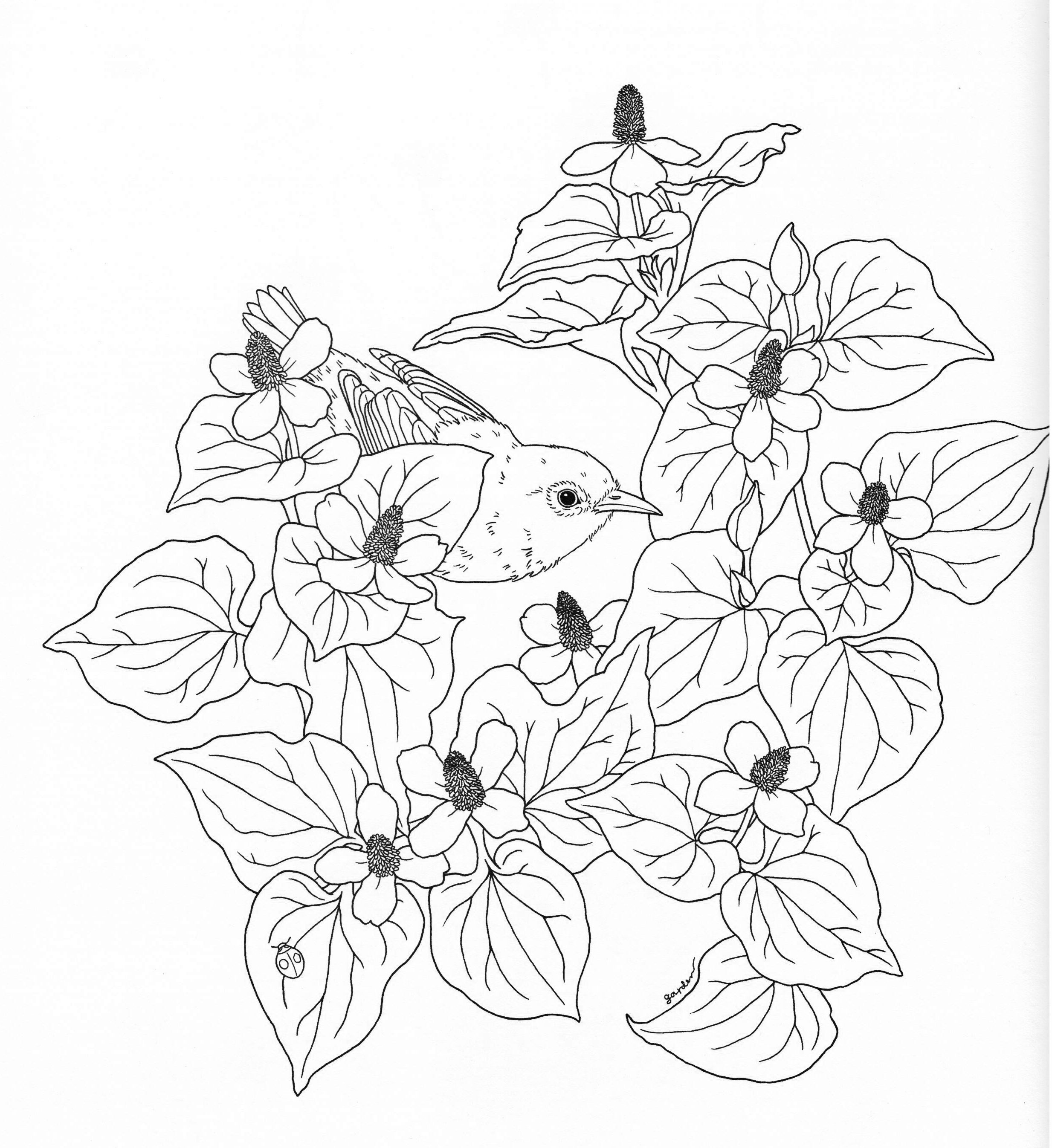 black and white coloring pages for adults vintage garden roses flowers adult coloring pages and black for adults pages white coloring