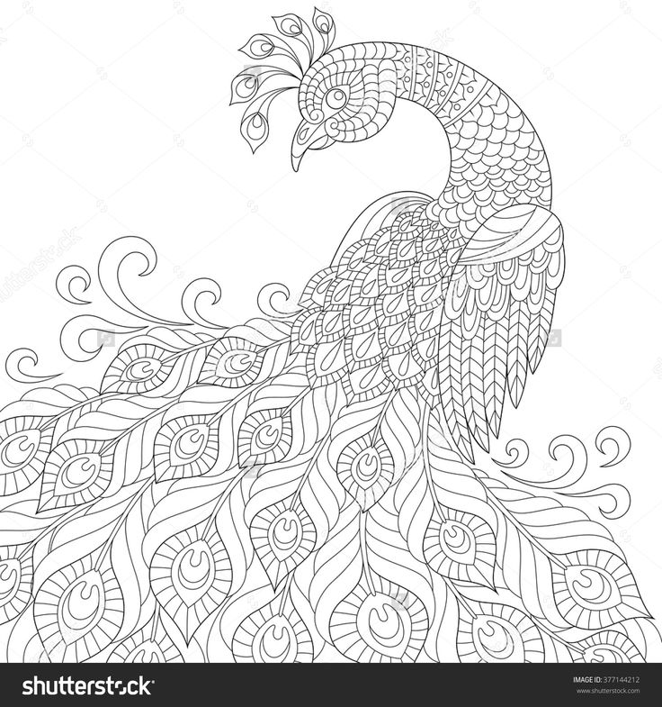 black and white colouring pages butterfly cutout coloring page butterfly black white to pages colouring black and white