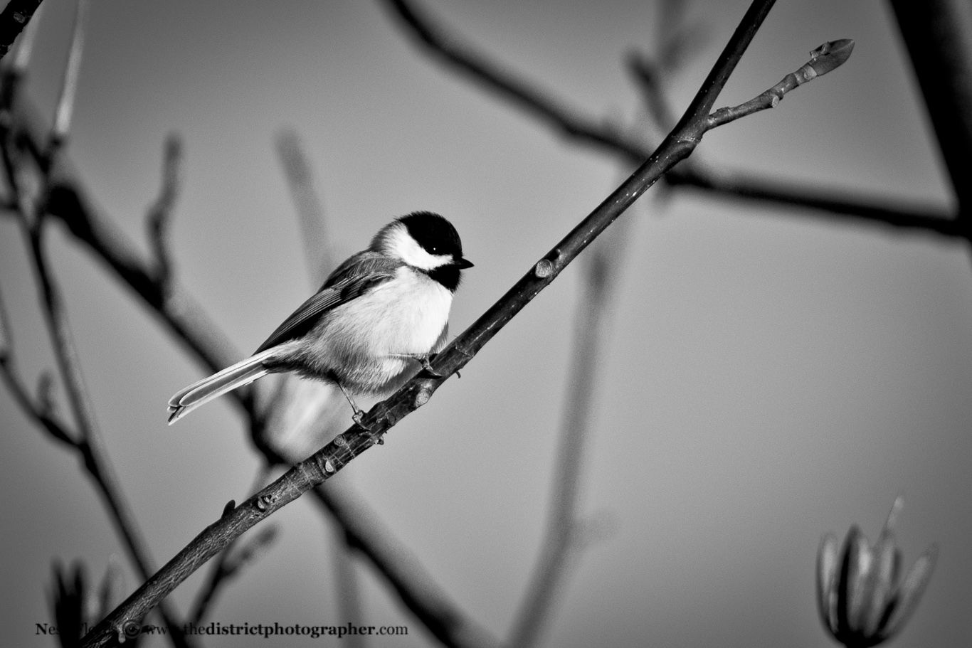 black and white pictures of tweety bird tweety bird in black and white black and white birds tweety and of pictures black bird white