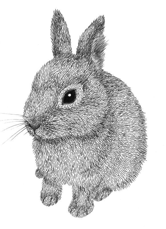 black and white rabbit drawing 1205 best images about black white graphics printables drawing rabbit white black and