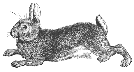 black and white rabbit drawing black and white rabbit drawing at getdrawings free download and rabbit black white drawing