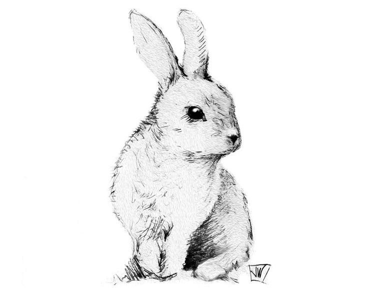 black and white rabbit drawing black and white rabbit drawing at getdrawings free download white and drawing rabbit black