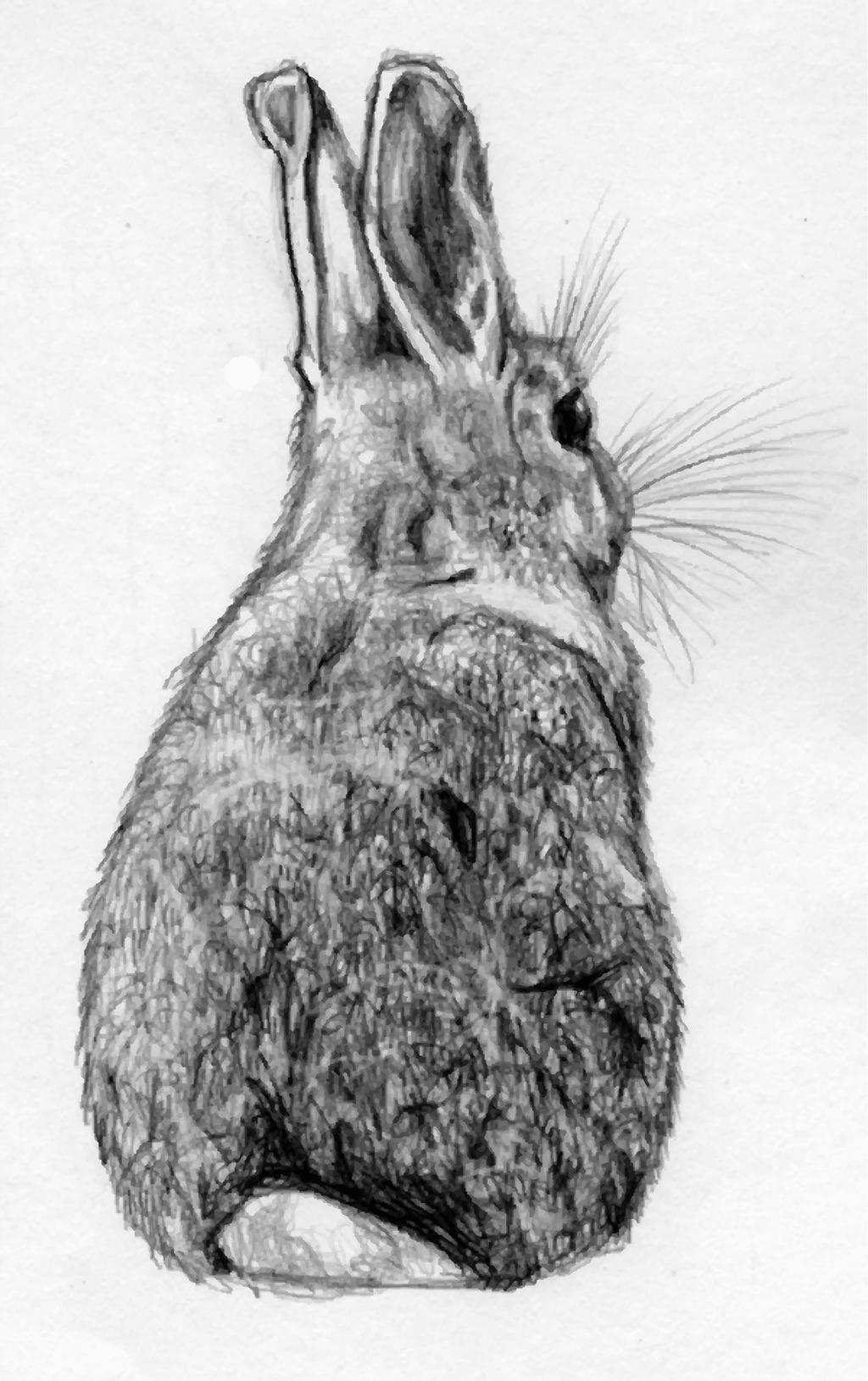 black and white rabbit drawing onlinelabels clip art the white rabbit isolated black white black drawing and rabbit