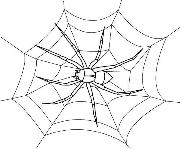 black spider coloring page the spider is black coloring page twisty noodle spider coloring black page