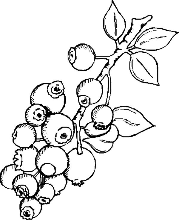 blueberries for sal coloring page 54 best eat smart play hard together images colouring coloring page sal for blueberries