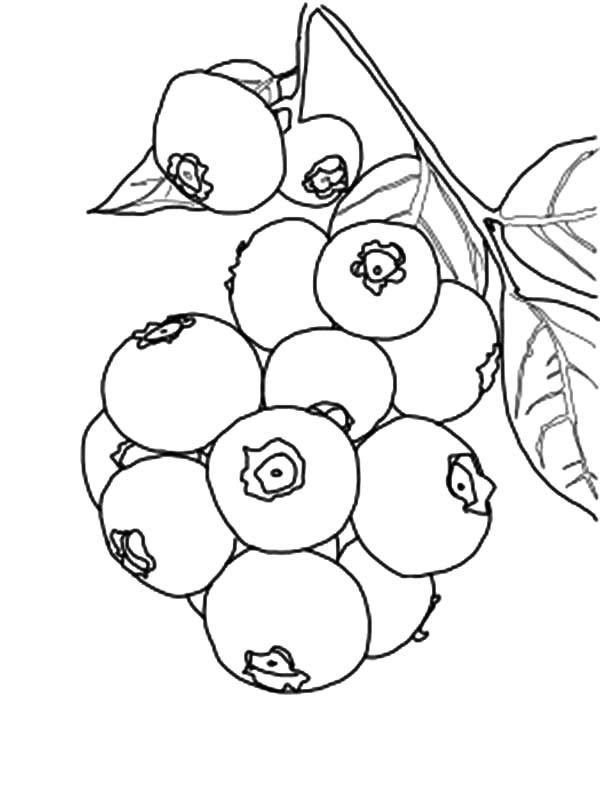 blueberries for sal coloring page blueberries for sal coloring page blueberries my older for blueberries sal coloring page