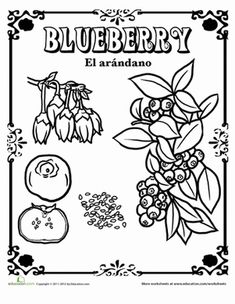 blueberries for sal coloring page blueberries for sal coloring page coloring pages for sal page blueberries coloring
