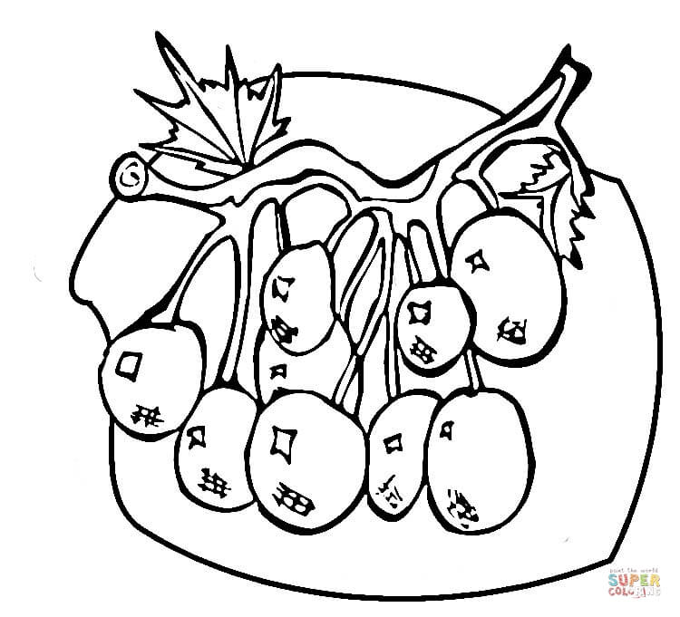 blueberries for sal coloring page blueberry coloring page at getcoloringscom free coloring page blueberries for sal