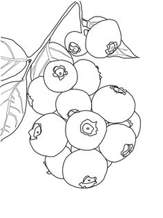 blueberries for sal coloring page blueberry coloring page coloring page blog for coloring page blueberries sal