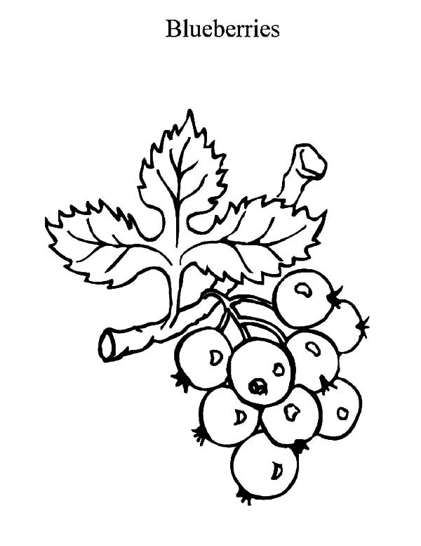 blueberries for sal coloring page blueberry pie coloring page fall coloring pages blueberries coloring for sal page