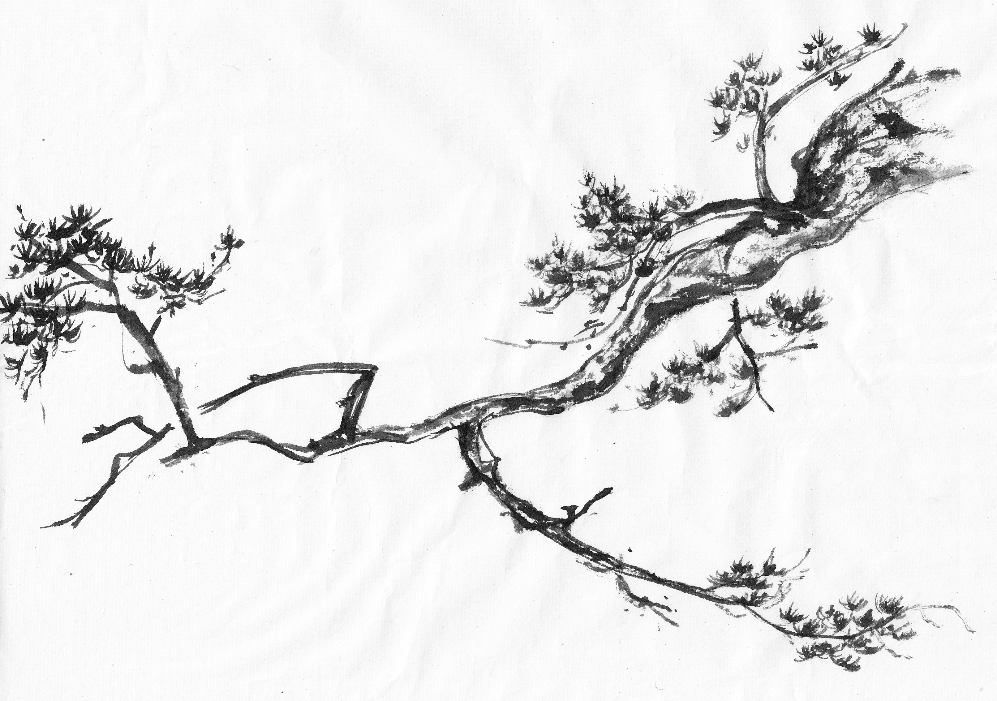 branch drawing apple tree branch drawing at getdrawings free download drawing branch