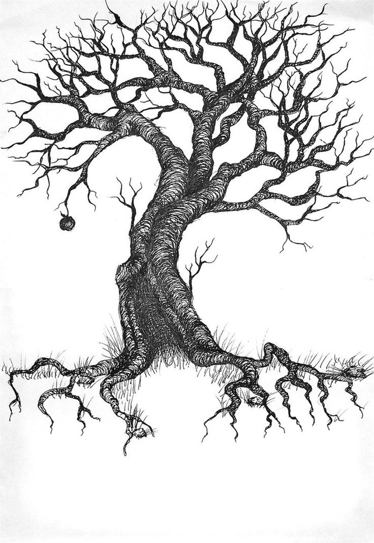 branch drawing branch clipart clip art tree branch clip art tree branch drawing