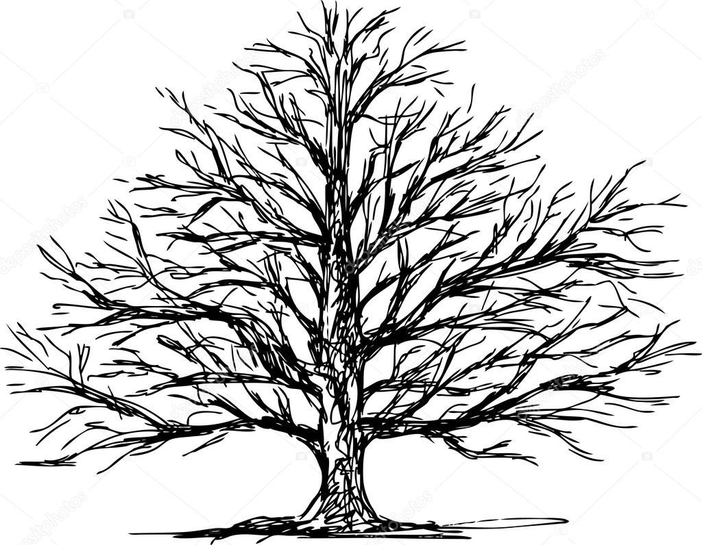 branch drawing dogwood branch drawing at getdrawings free download drawing branch