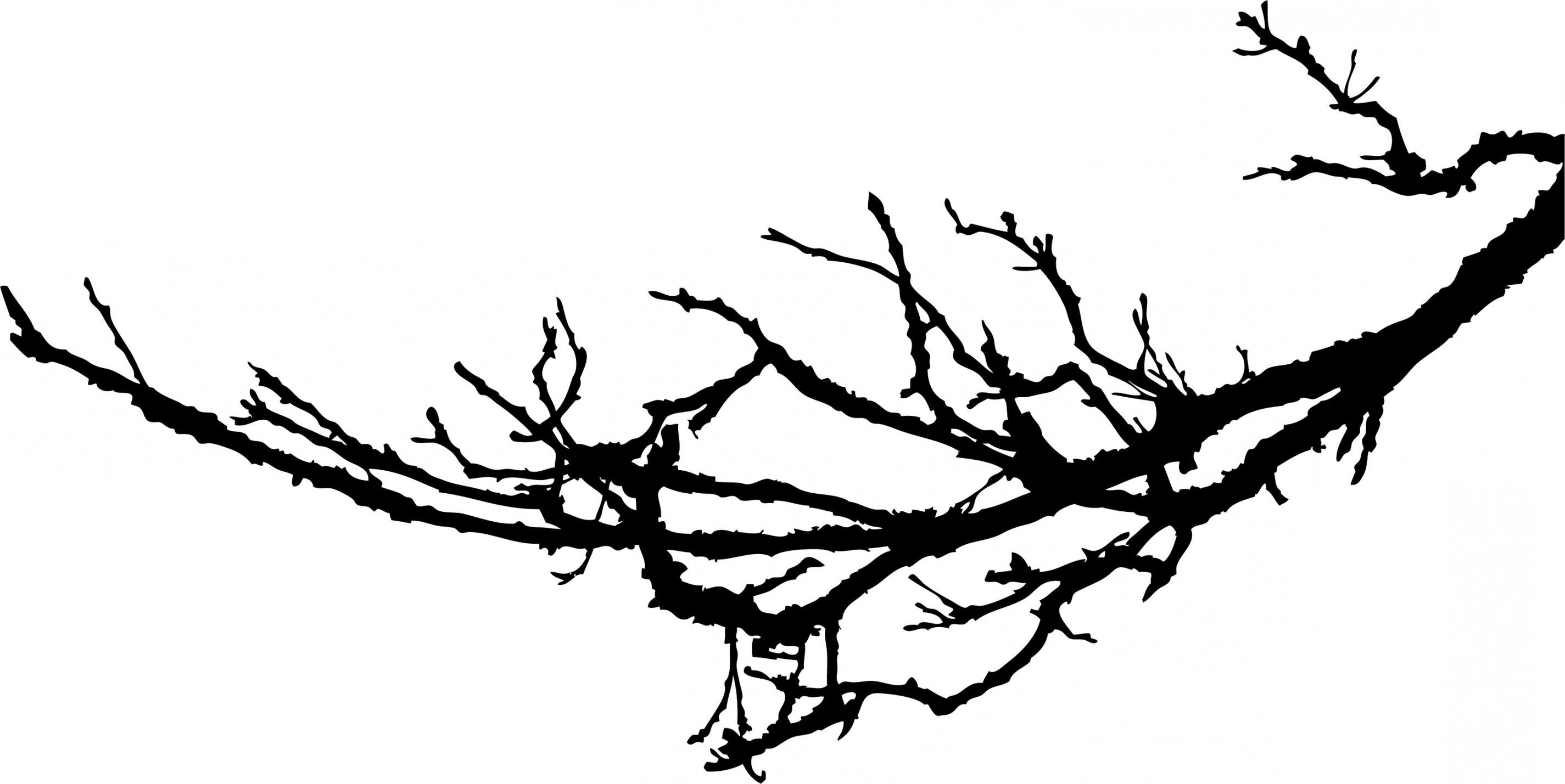 branch drawing how to draw a leafless tree easy branch drawing