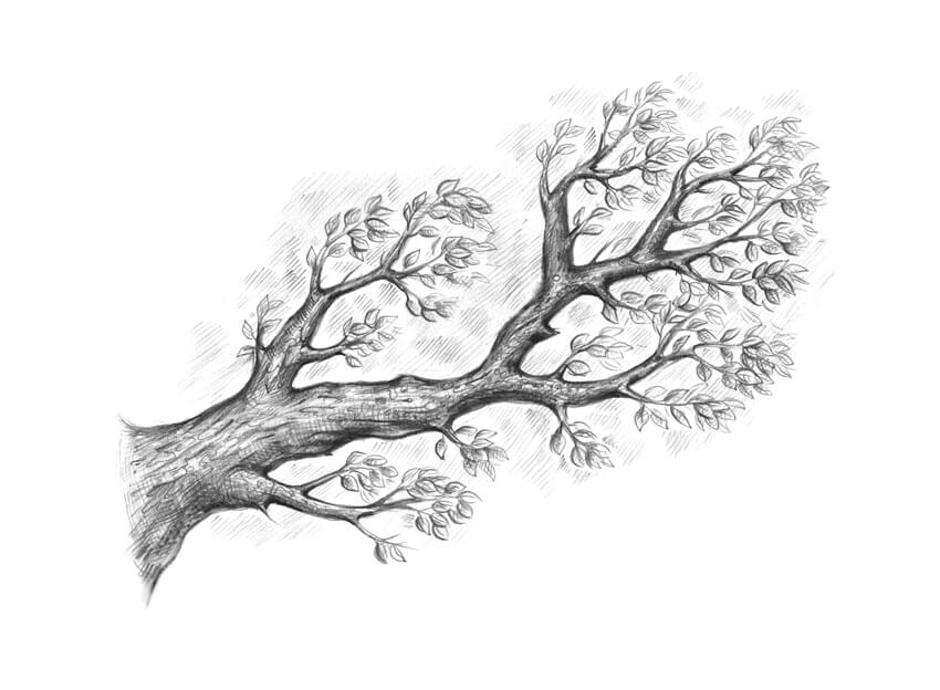 branch drawing how to draw an oak tree step by step branch drawing