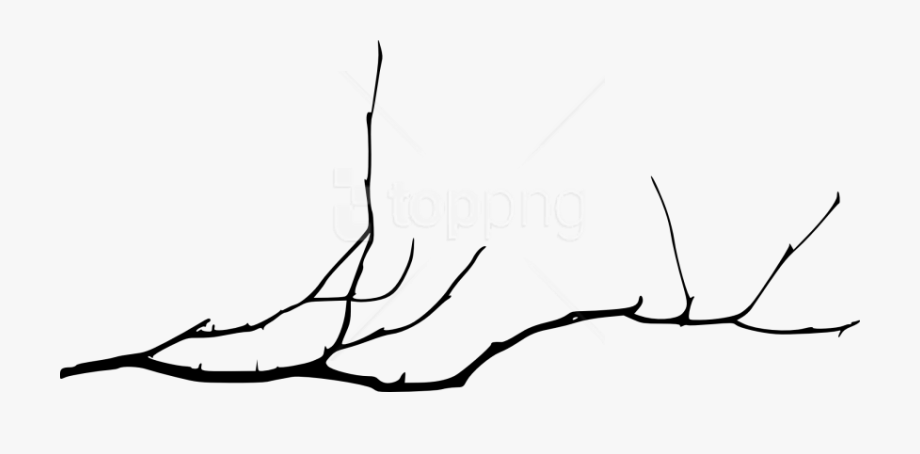 branch drawing oak tree branch drawing free download on clipartmag drawing branch