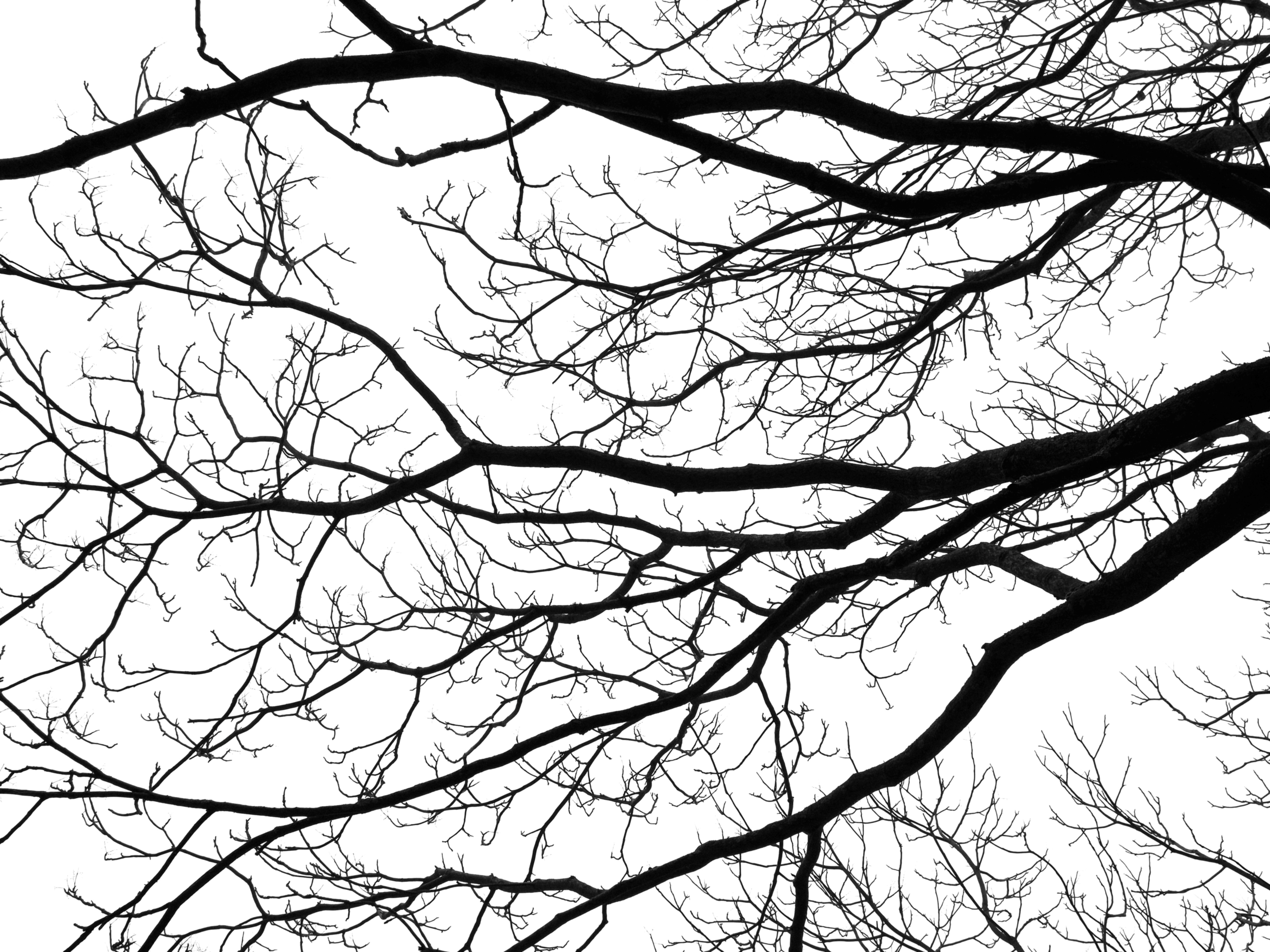 branch drawing tree branch drawing at getdrawings free download branch drawing