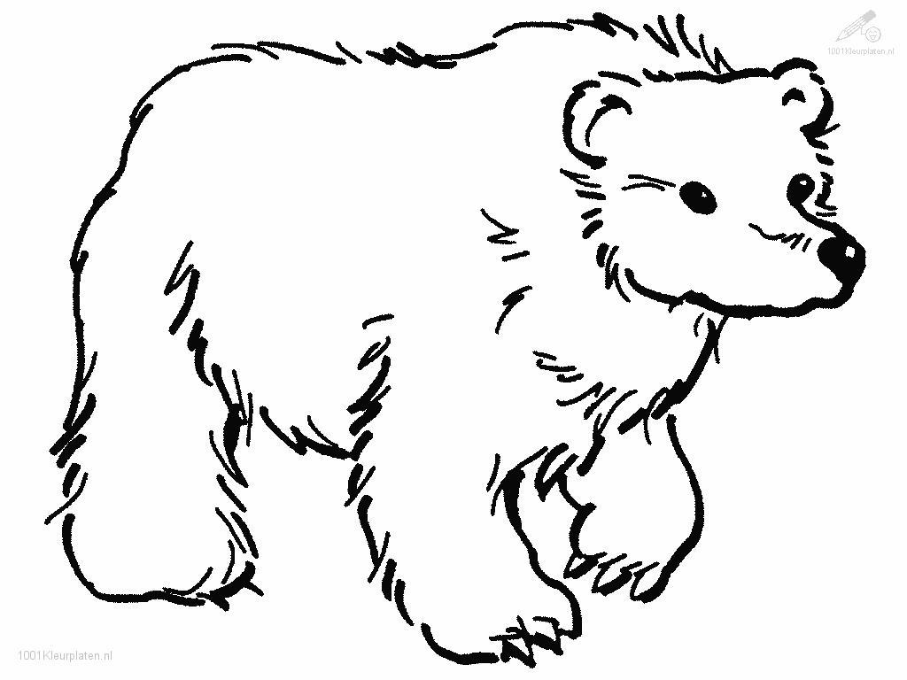 brown bear coloring pages brown bear coloring pages download and print for free pages bear coloring brown