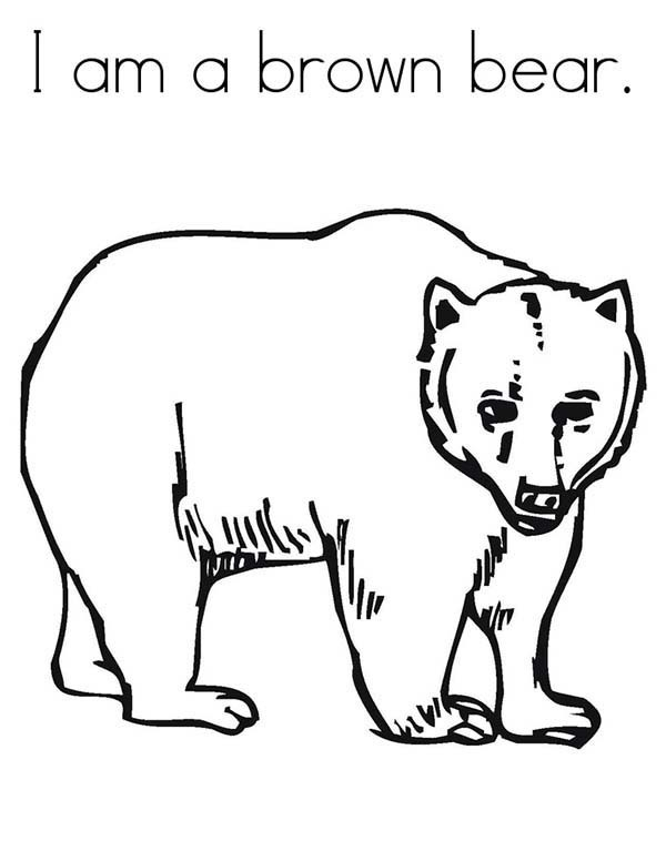 brown bear colouring page brown bear brown bear what do you see coloring pages page brown colouring bear