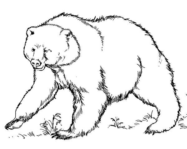 brown bear colouring page brown bear coloring pages download and print for free brown bear colouring page