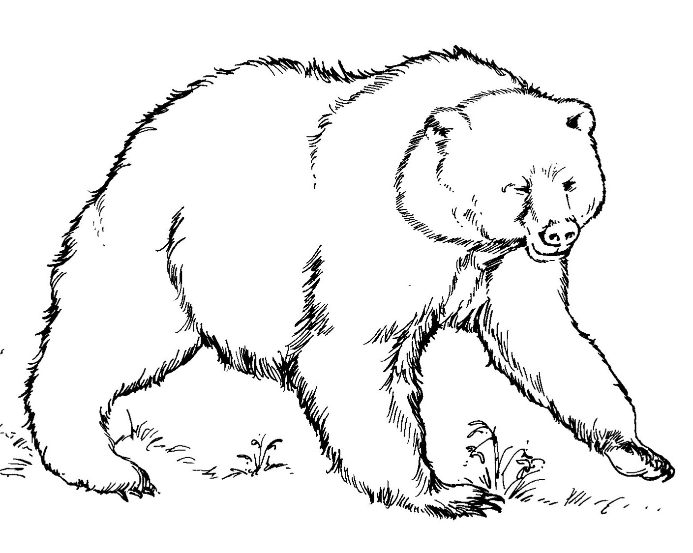 brown bear colouring page brown bear coloring pages download and print for free colouring bear brown page