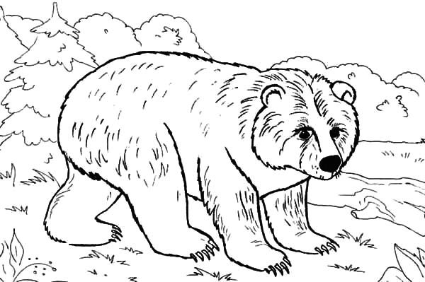 brown bear colouring page brown bear printables coloring home bear brown colouring page