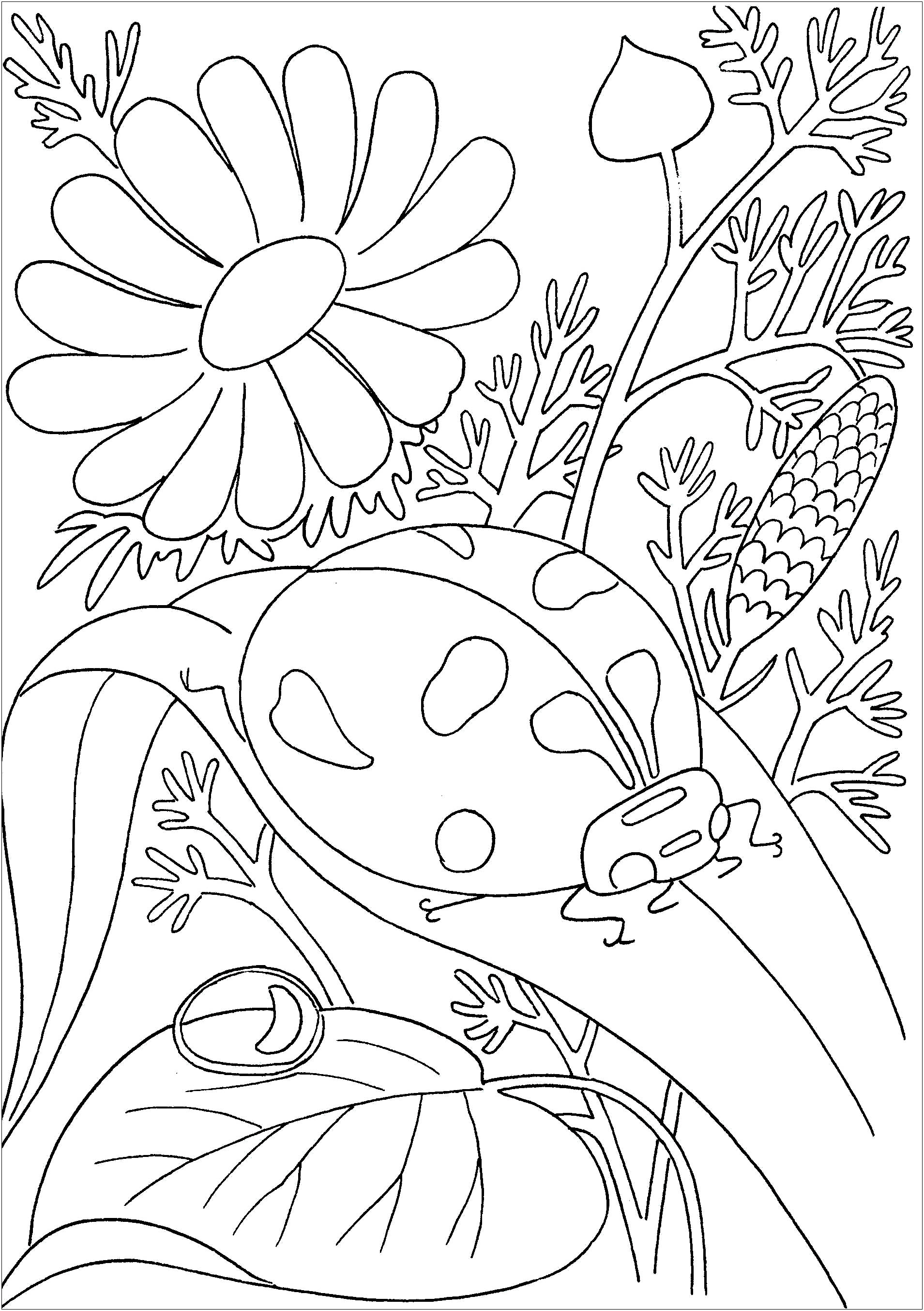 bug coloring pages free printable bug coloring pages for kids pages coloring bug