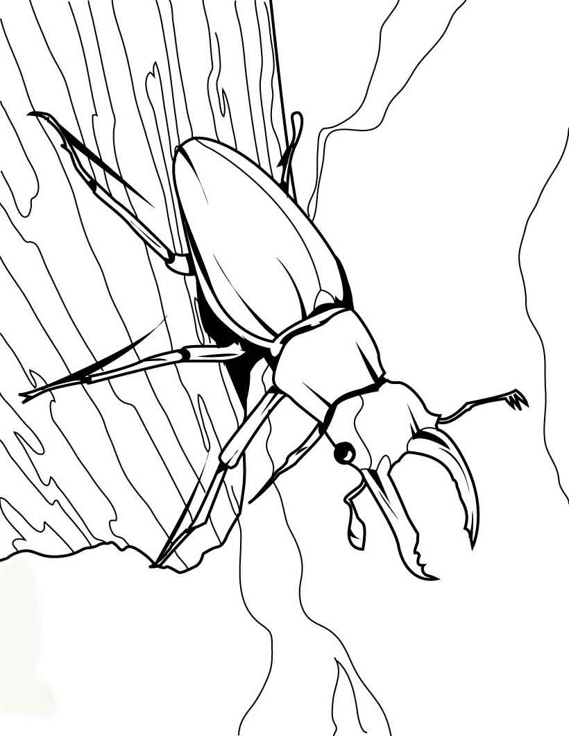 bug coloring pages insects coloring pages coloring bug pages