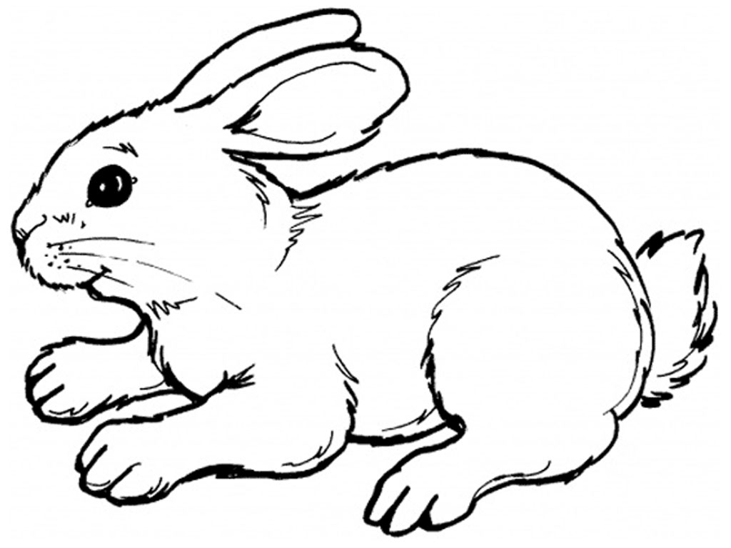 bunny picture to color rabbit for children rabbit kids coloring pages color bunny to picture