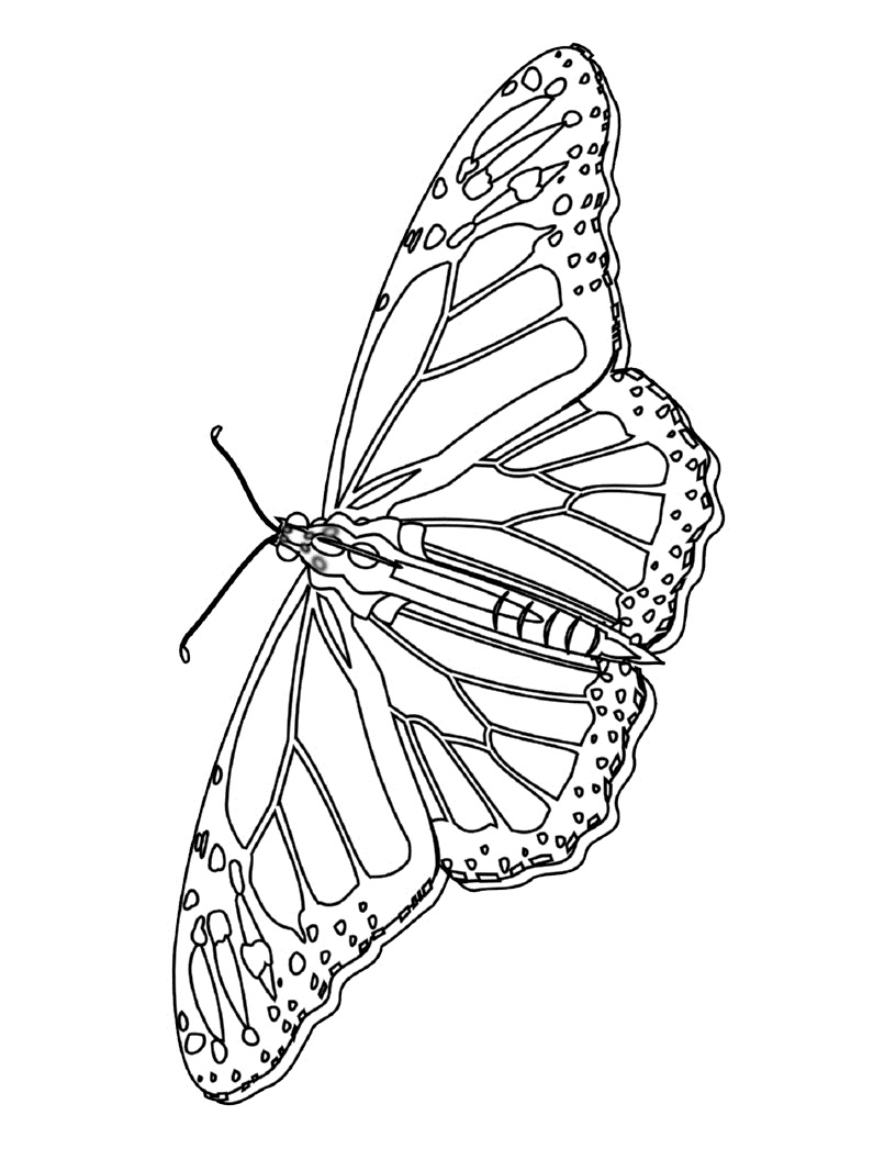 butterfly color page butterflies to download for free butterflies kids page butterfly color