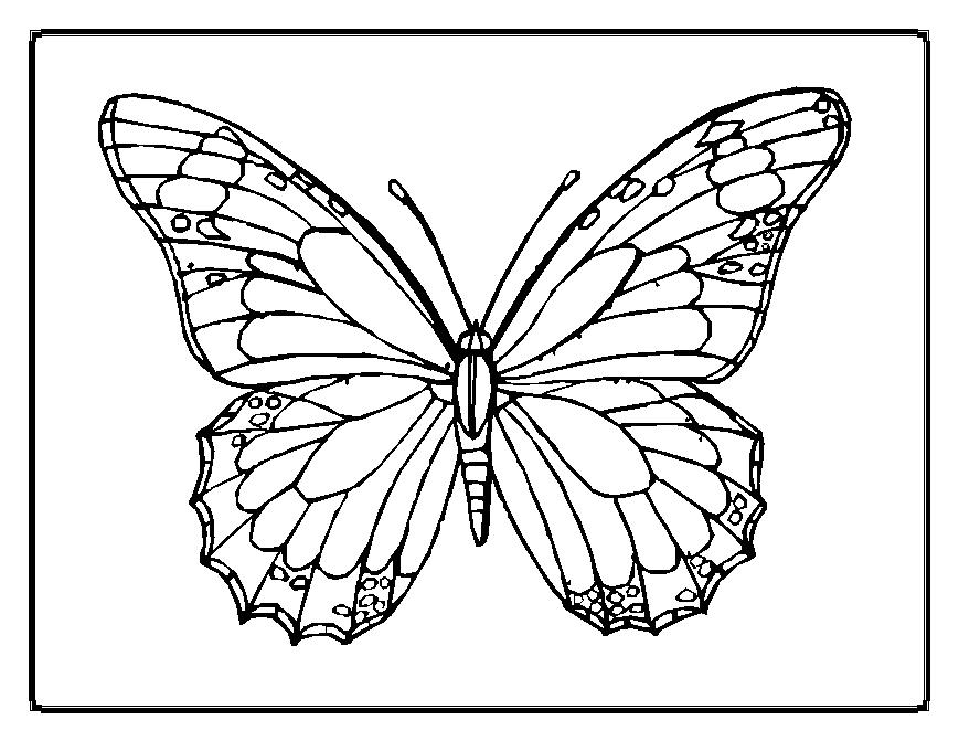 butterfly color page butterfly coloring pages butterfly page color
