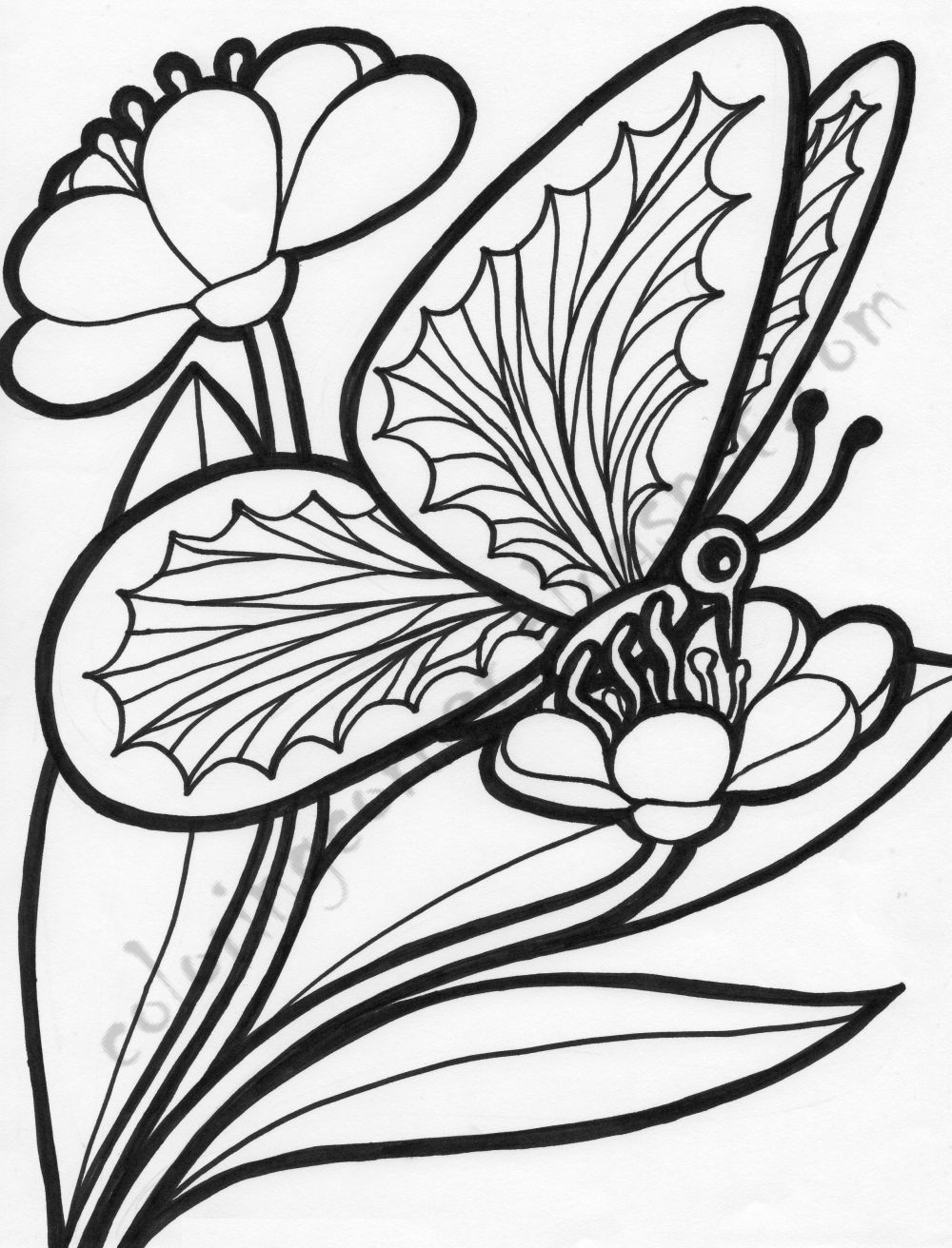 butterfly color page butterfly coloring pages color butterfly page