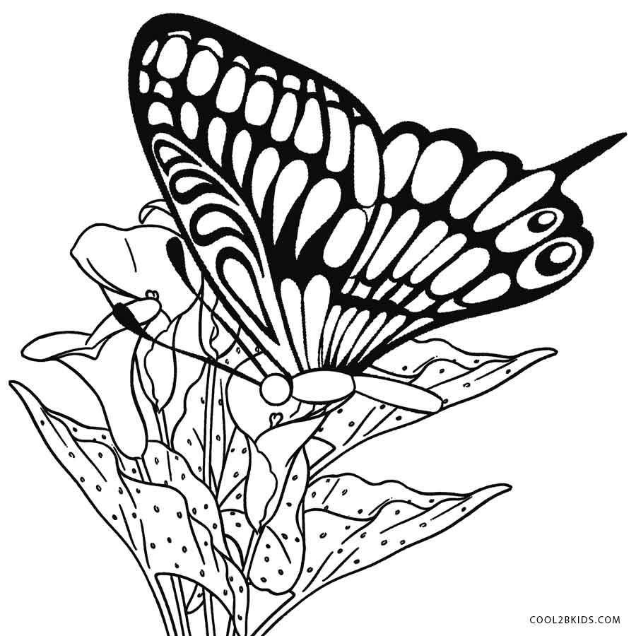 butterfly color page butterfly coloring pages free download on clipartmag color page butterfly