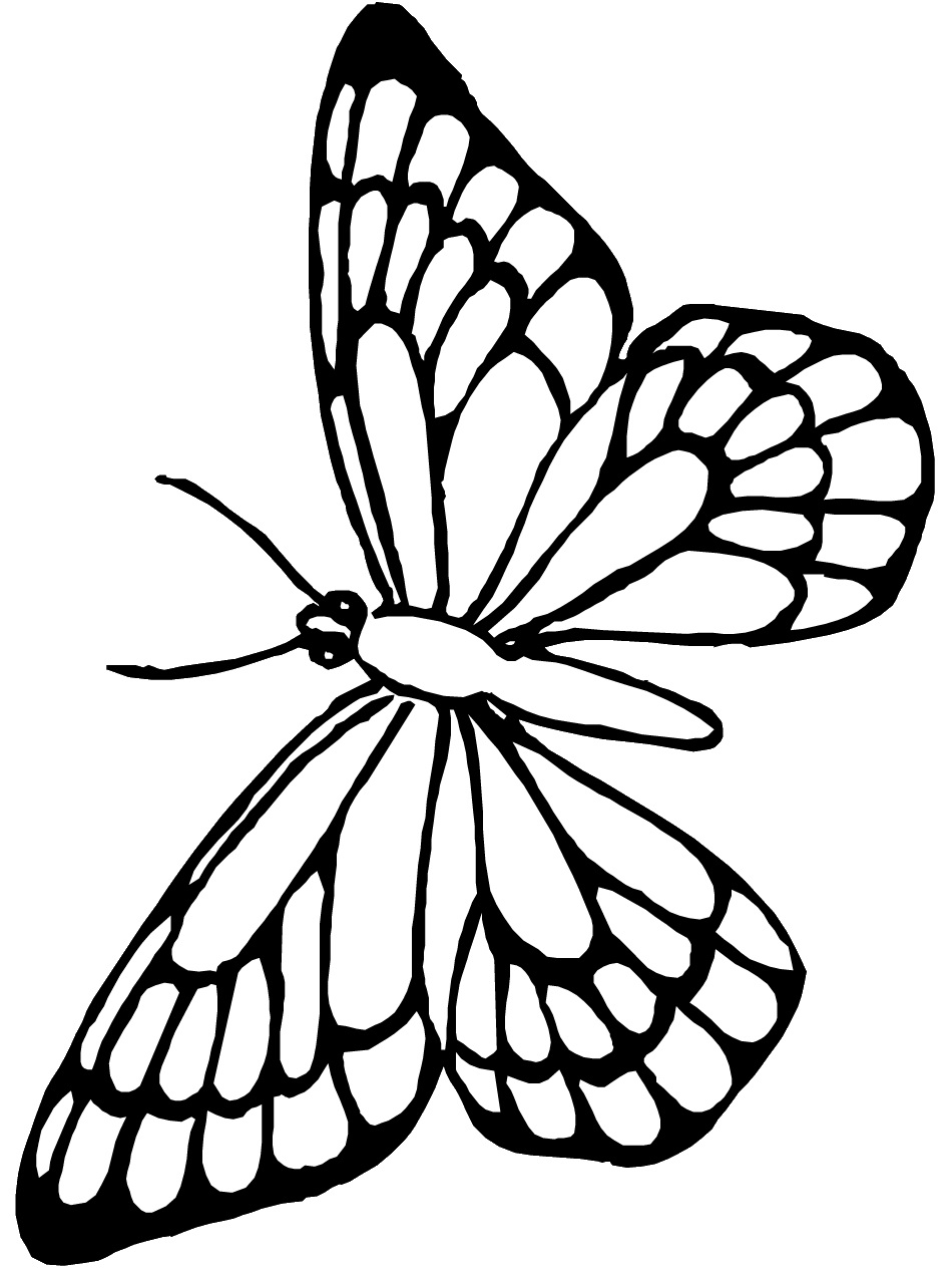 butterfly color page monarch butterfly coloring page high quality coloring page butterfly color