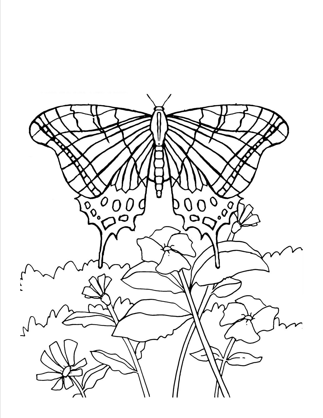 butterfly coloring pages free printable free printable butterfly coloring pages for kids coloring butterfly pages printable free