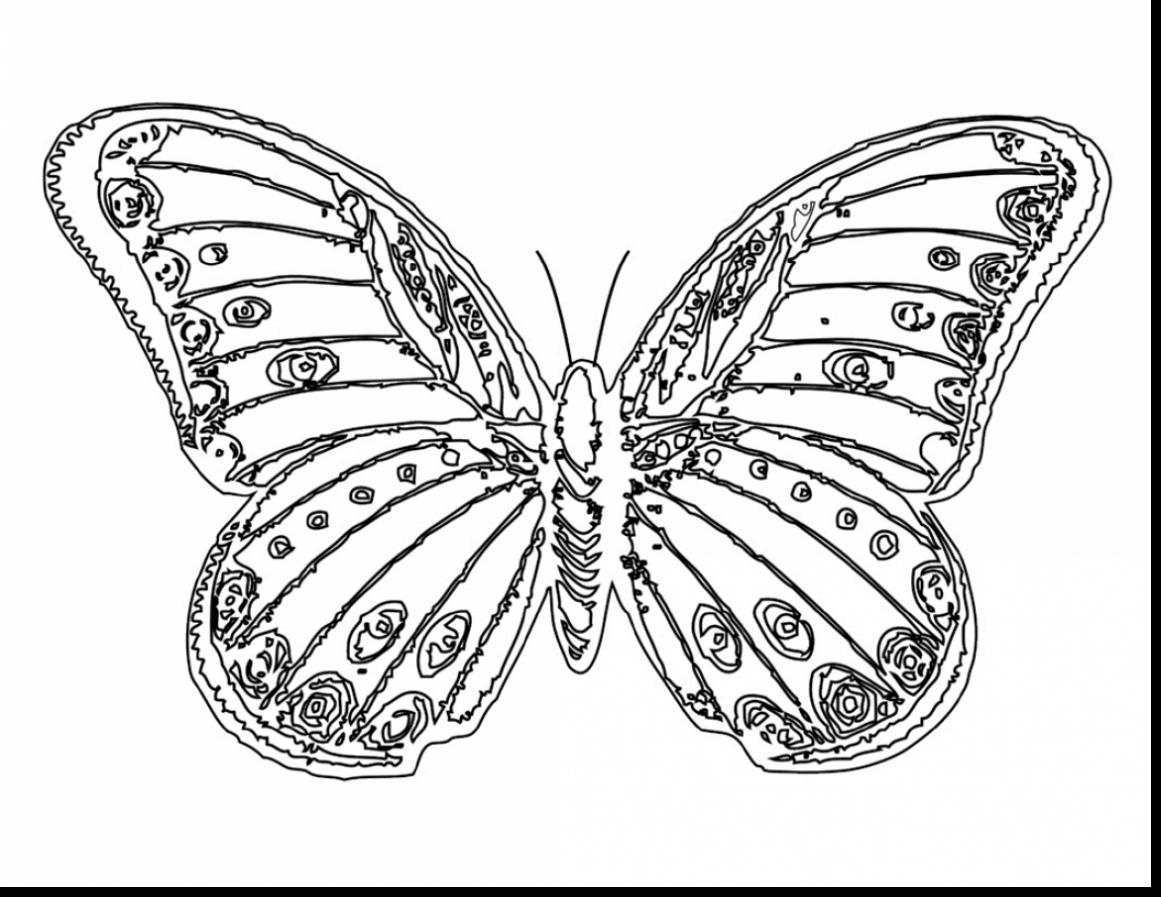 butterfly coloring pages free printable free printable butterfly coloring pages for kids pages coloring printable butterfly free 1 1