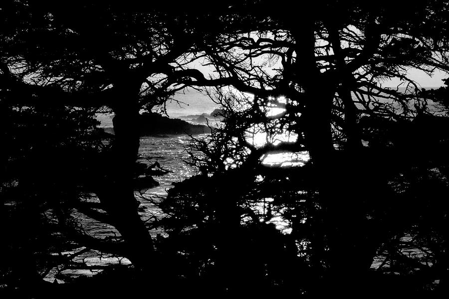 california state tree black and white picturephoto visitor looking at fallen state tree california
