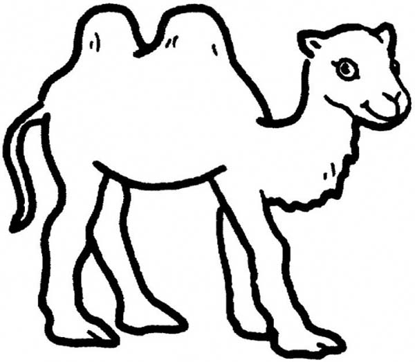 camel pictures to colour camel coloring pages download and print camel coloring pages to pictures colour camel