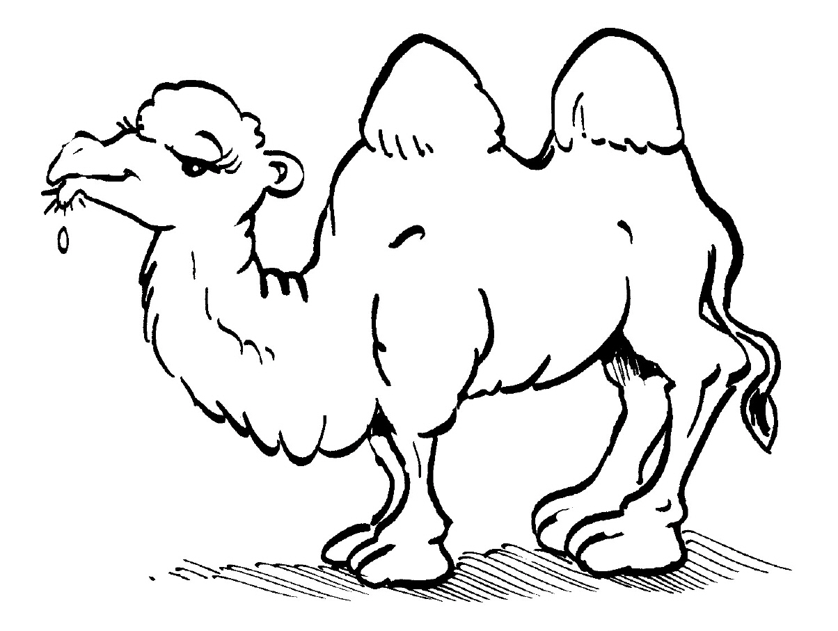camel pictures to colour camel coloring pages kiddo pictures to camel colour