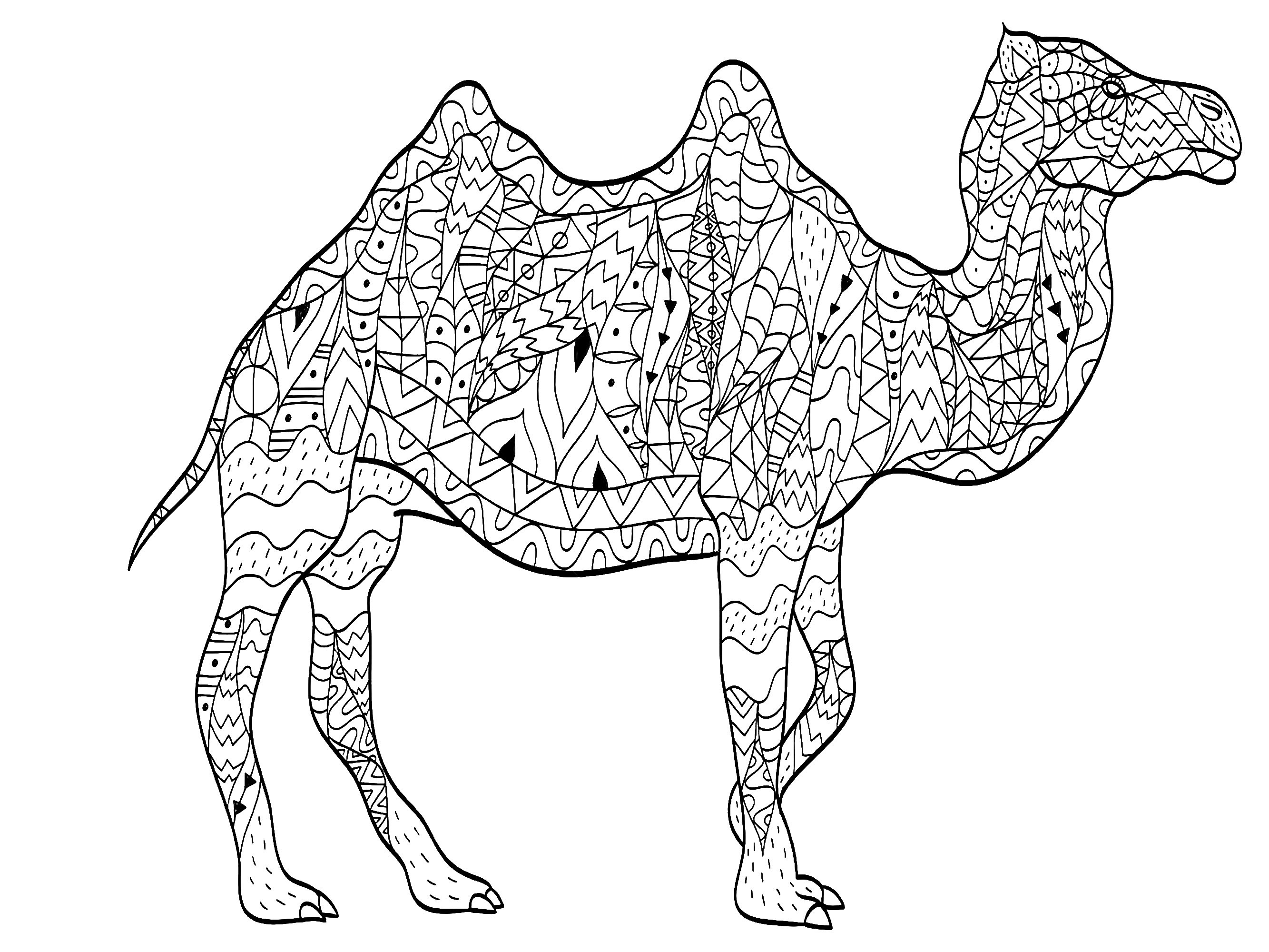 camel pictures to colour camel printable bible coloring pages kids bible maps to pictures camel colour