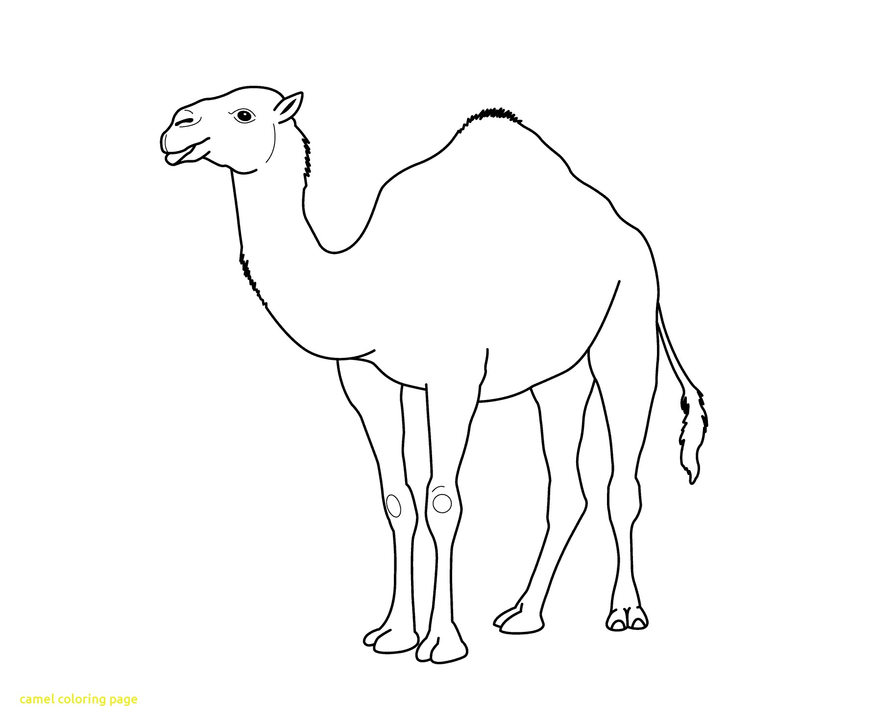 camel pictures to colour free camel coloring pages colour pictures camel to