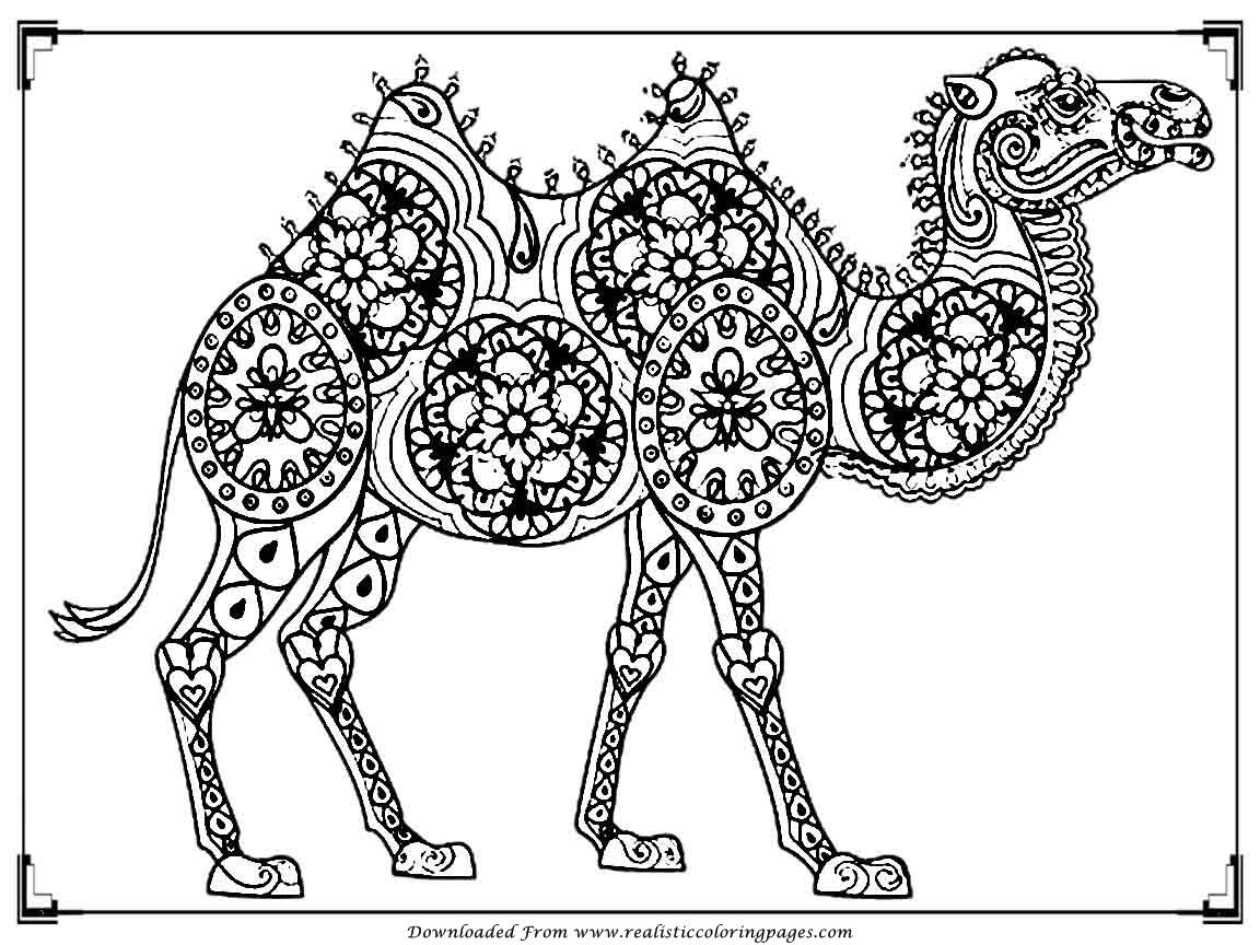 camel pictures to colour printable camel coloring pages for adult realistic pictures colour camel to