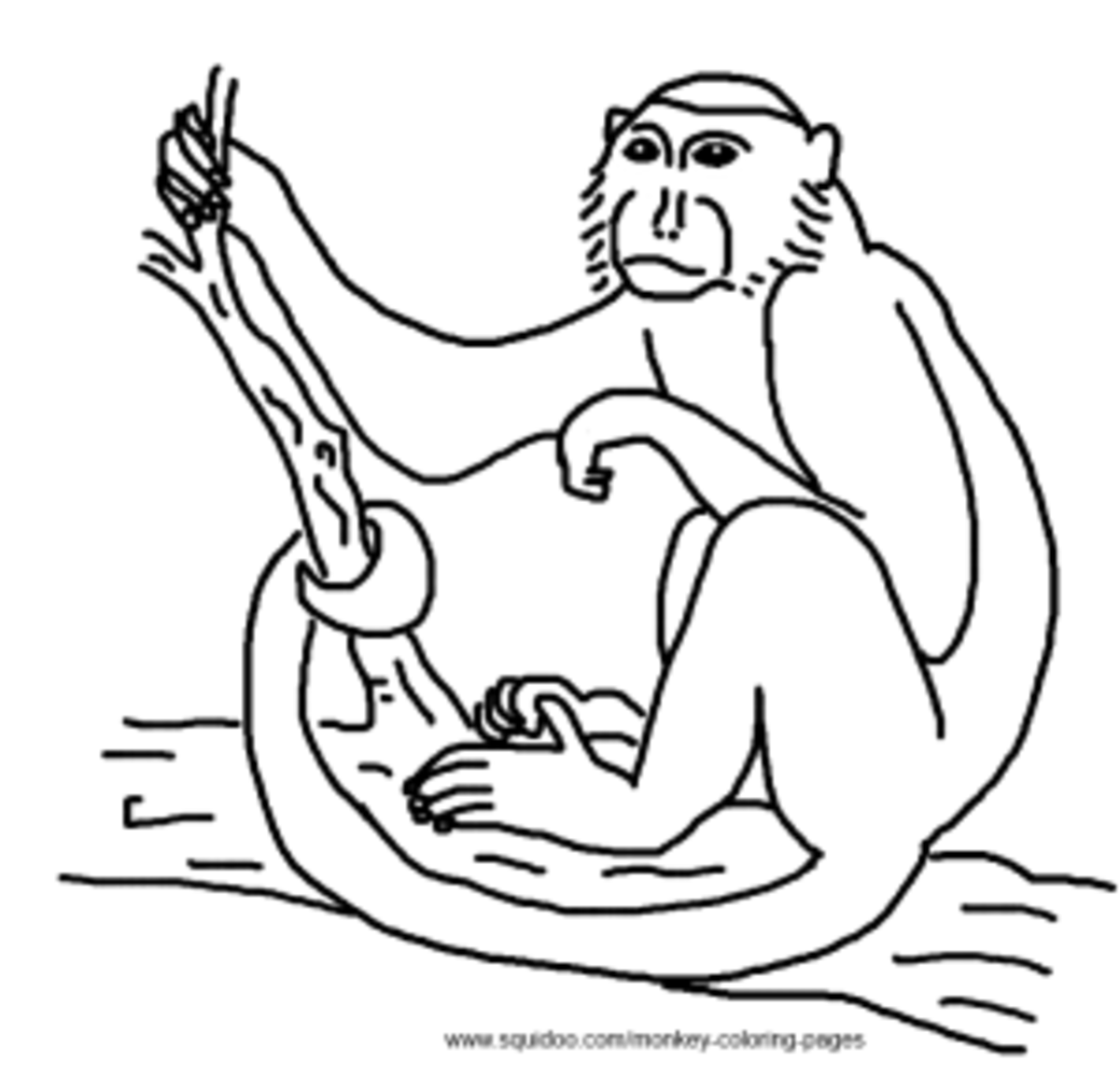 capuchin monkey coloring page download capuchin coloring for free designlooter 2020 coloring page monkey capuchin