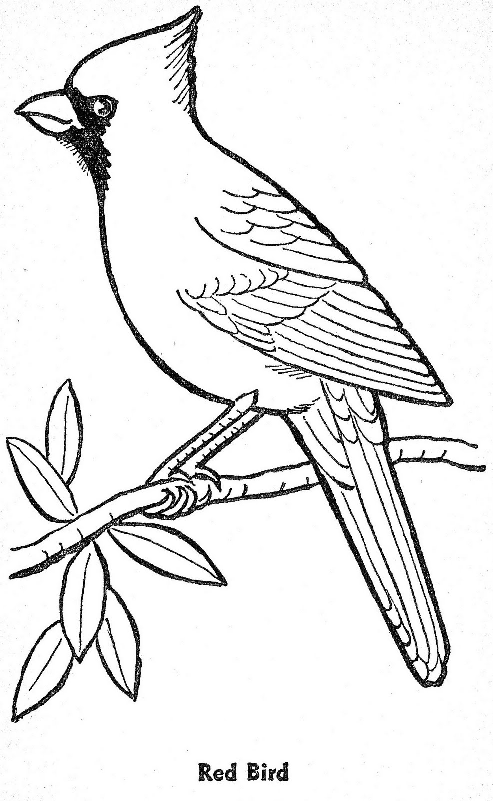cardinal coloring page two red cardinals coloring page supercoloringcom bird page coloring cardinal