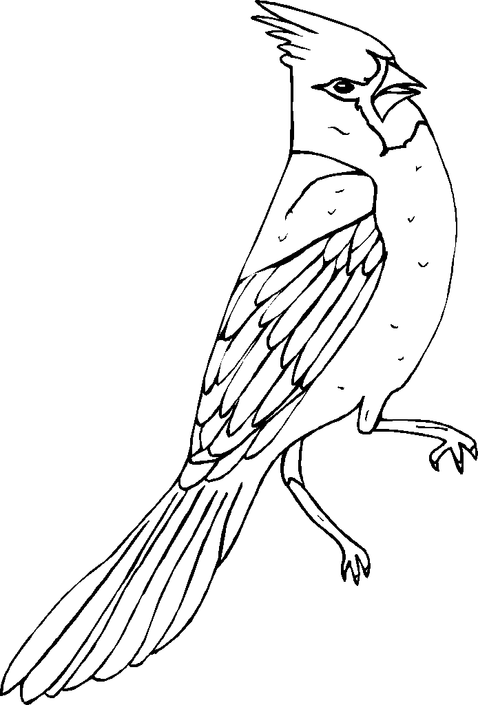 cardinal outline cardinal on a branch coloring picture in 2020 bird outline cardinal